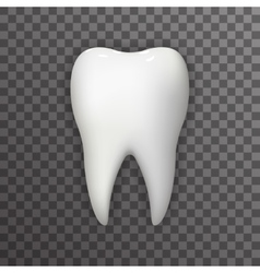 Realistic 3d Tooth Poster Transperent Stomatology vector
