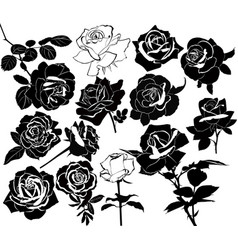 set of flowers of roses isolated on white backgrou vector image