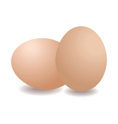 Two eggs vector