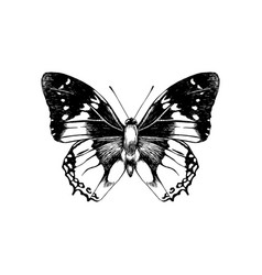 hand drawn butterfly vector image