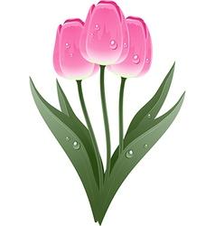 Tulip plant vector image