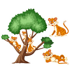 Big tree and many tigers on white background vector
