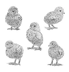 chickens sketch set hand drawn vector image