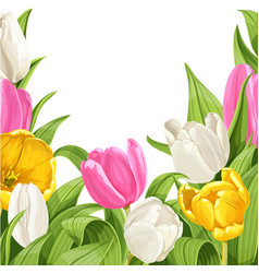 green background tulips vector image