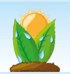 Photosynthesis process in the plants vector