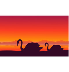 Scenery swan at sunset silhouettes vector