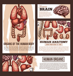 Anatomy of human organs sketch banner template vector