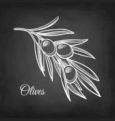 chalk sketch of olive branch vector image
