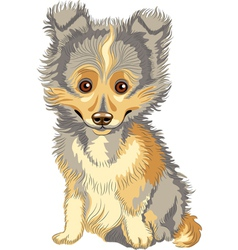 cute puppy breed shetland vector image
