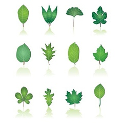 tree leafs and nature icons vector image