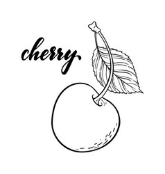 beautiful cartoon black and white outline cherry vector image