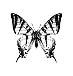 hand drawn western tiger swallowtail butterfly vector image