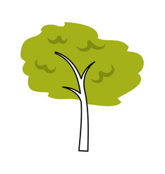 tree plant forest icon vector image