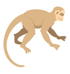 white capuchin icon isolated vector image vector image