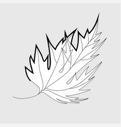 autumn fallen maple leaf vector image
