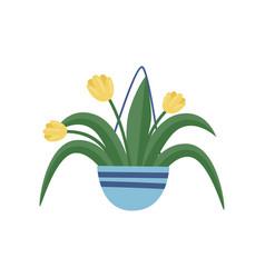 hanging garden pot with yellow tulips beautiful vector image