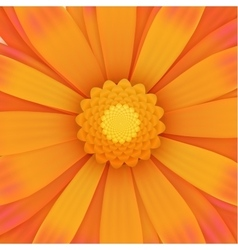 Orange gerbera flower realistic vector