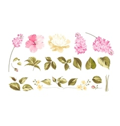 Elements of flower bouquets vector image vector image