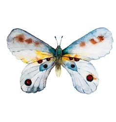 Watercolor butterfly vector image