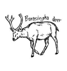 barasingha deer - sketch hand drawn vector image