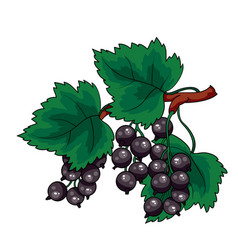 big bush black currant with green leaves vector image