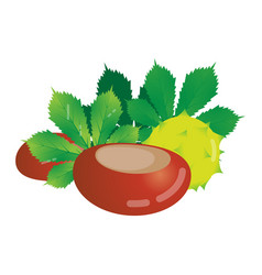 Chestnut isolated objects vector