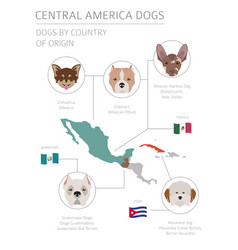 dogs by country of origin latin american dog vector image