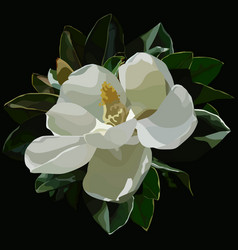painted large blossomed white magnolia flower on a vector image