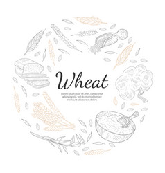 Wheat organic product banner template vector