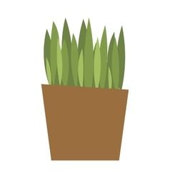 Spring colorful garden grass in pot vector image vector image