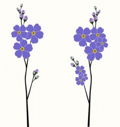 beautiful forget-me-nots vector image vector image