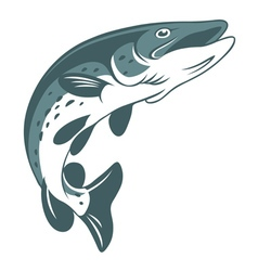 pike fishing vector image vector image