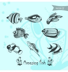 amazing fish vector image