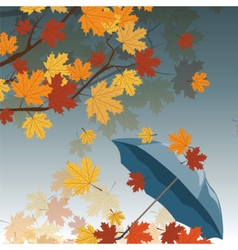 Autumn leaves and umbrella vector