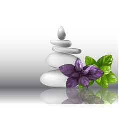 Basil herb leaves and stones vector