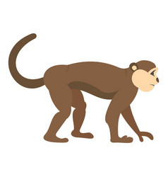 Macaque monkey icon isolated vector