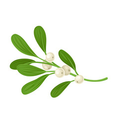 Mistletoe evergreen festive twig vector