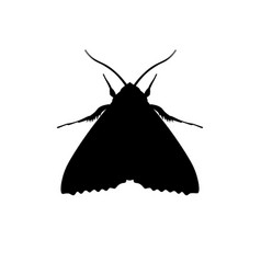 silhouette of codling moth vector image