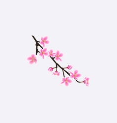 small isolated sakura tree twig with realistic vector image