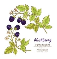blackberry set vector image