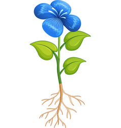 Blue flower with green leaves and roots on white vector