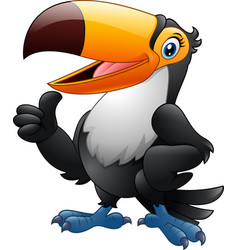 cartoon funny toucan giving thumb up isolated on w vector image