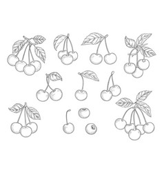 Cherry set hand drawn natural healthy fruits vector
