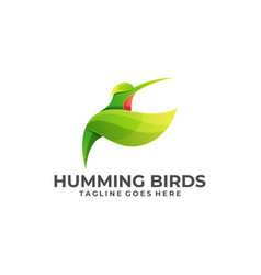 humming birds color design template vector image