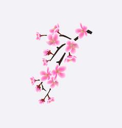 japanese sakura or cherry blossom branch vector image