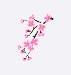 japanese sakura or cherry blossom branch with vector image