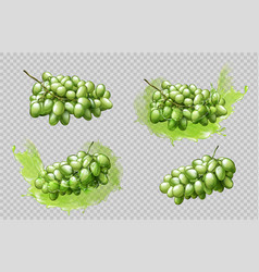 realistic grapes bunches and splashes set isolated vector image
