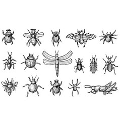 insects set with beetles bees and spiders vector image