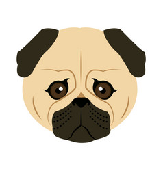 color sketch cute serious dog fawn pug vector image