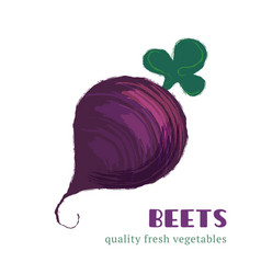 fresh beets isolated on white background vector image vector image